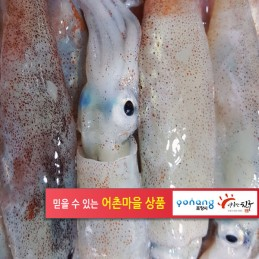 총알오징어 (미니오징어) 500g